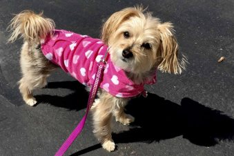 Here's Pebbles looking very pretty in pink!