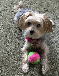 Pebbles loves to play fetch!