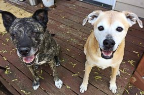 Sid and Lola are waiting patiently (sort of) for our yummy, homemade treats!