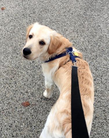 Marley loves to walk and run!